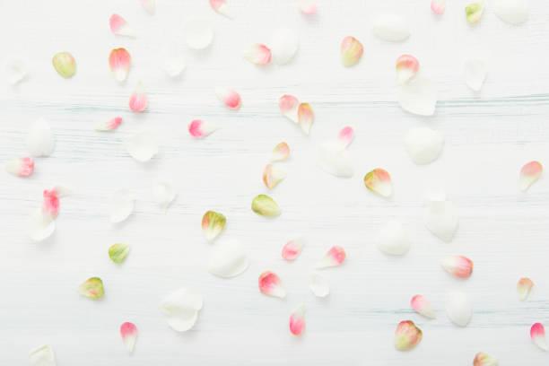 patroon van verspreide bloemblaadjes - caernarfon and merionethshire stockfoto's en -beelden