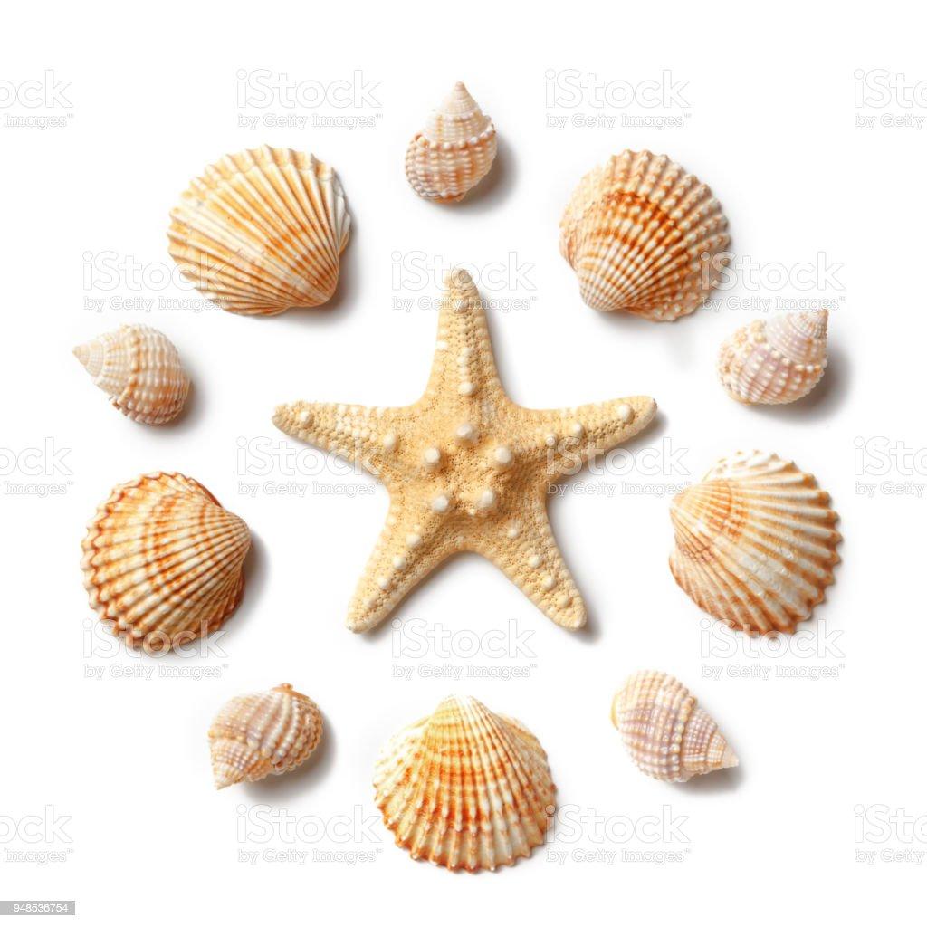 Muster von Muscheln und Seesterne isoliert auf einem weißen Hintergrund. – Foto