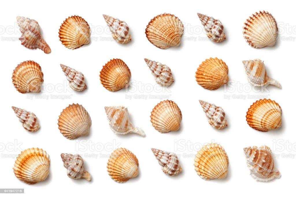 Muster der Muscheln isoliert auf einem weißen Hintergrund. – Foto