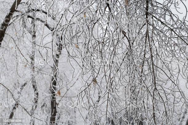 Photo of A pattern of tree branches covered with snow. Hoarfrost on the branches. Natural background. Winter nature. Winter patterns. Horizontal format of the frame