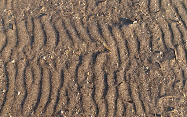 Pattern of Wind Blown Sand Wind blown into patterned textures on a windy day.  Cocoa Beach, Florida, USA.  March 5, 2017 michael stephen wills Florida stock pictures, royalty-free photos & images