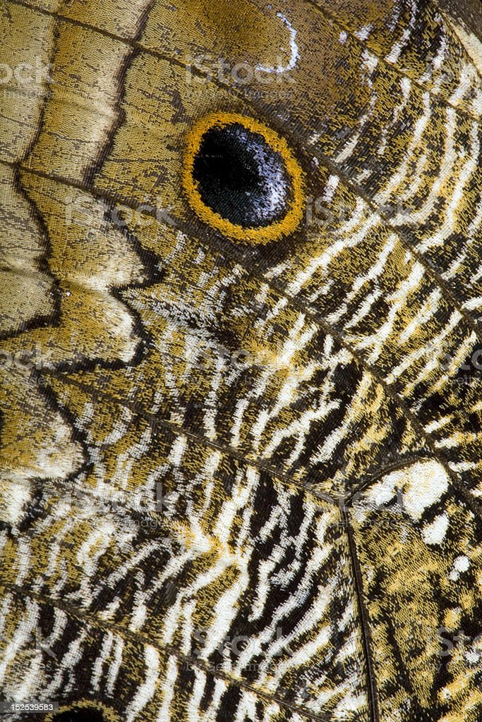 Pattern on the wing of an owl butterfly royalty-free stock photo