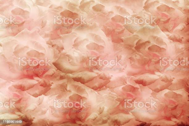 Pattern soft blur rose flowers for background picture id1195961449?b=1&k=6&m=1195961449&s=612x612&h=8dfcv8wchclkuiv2xnn5nbawdqn3 0peogn6 zdrpl8=