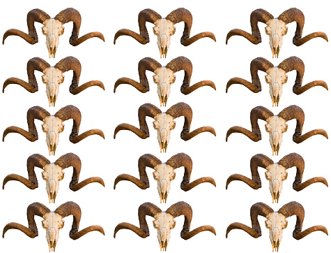 istock Pattern texture skull animal ram with curled horns several rows of images blank on white isolated background 938116742