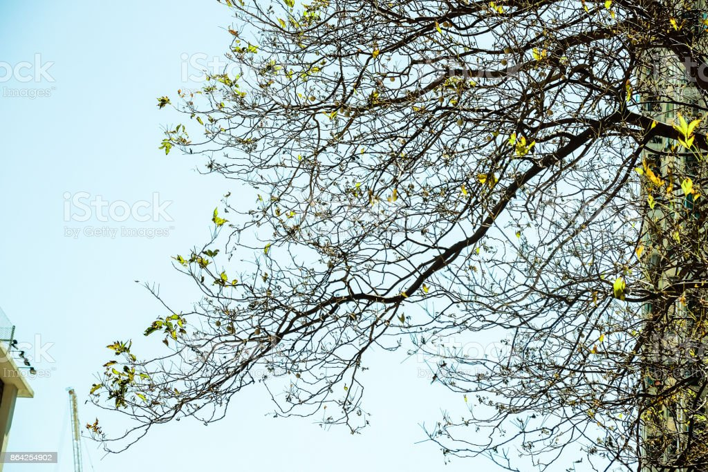 Pattern under the tree royalty-free stock photo