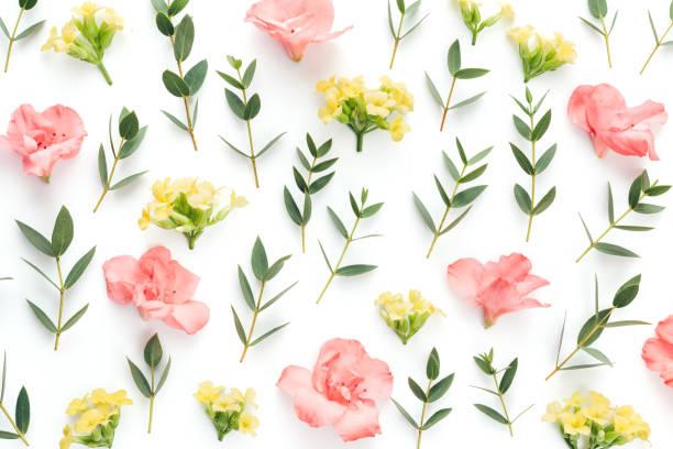 desen renkli çiçekler ve yeşil beyaz arka plan üzerinde bırakır - taç yaprak stok fotoğraflar ve resimler