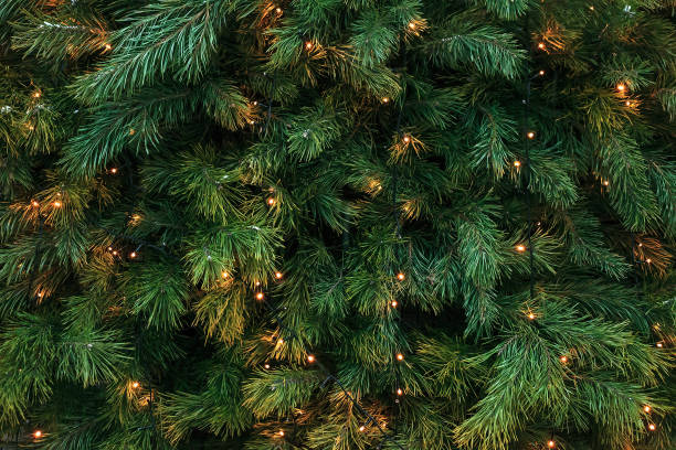 Pattern with green branches with pine illuminated garlands lights, soft focus Pattern with green branches with pine needles illuminated. Texture of coniferous tree decorated garlands lights. Christmas holidays backdrop soft focus christmas tree stock pictures, royalty-free photos & images