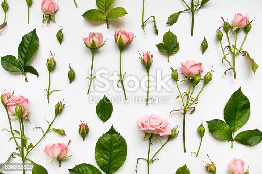 Decorative pattern with light pink gentle roses, leaves and buds on white background. Flat lay, top view, view from above