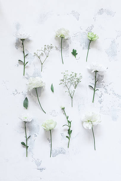 Pattern with white flowers on gray background. Flat lay - foto de stock