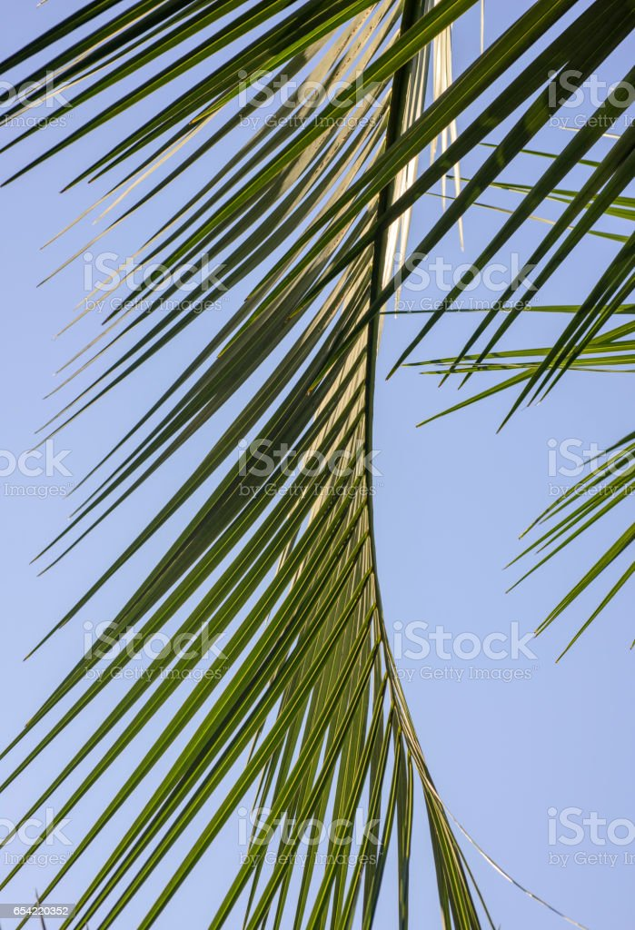 patterned leaves in the park stock photo