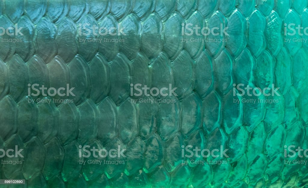 Patterns of seawater fish stock photo