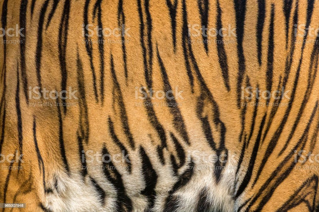 Patterns of tiger skin. zbiór zdjęć royalty-free
