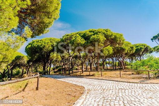 Paved path with wooden railings in beautiful southern pine tree forest, Quinta do Lago, Algarve, south Portugal