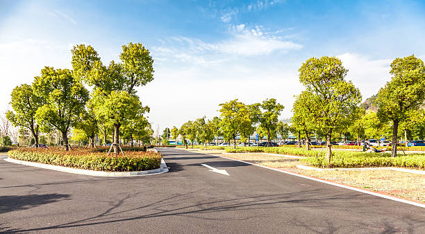 paved road among green trees and plants on a sunny day - meydan stok fotoğraflar ve resimler