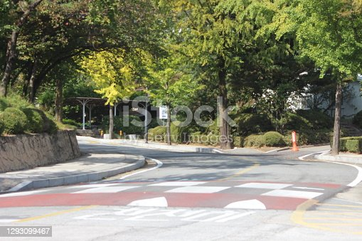 Paved road between trees with road lines and zebra crossing