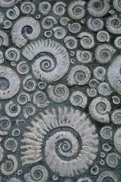 Pflaster, dekoriert mit Stein fossile Ammoniten – Foto