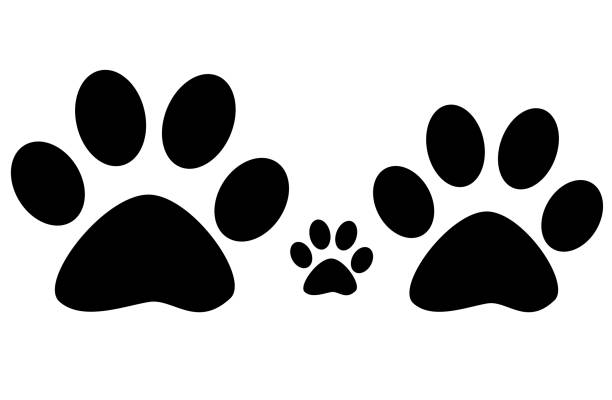 Paw family print on white background picture id692972908?b=1&k=6&m=692972908&s=612x612&w=0&h=sxvhca2fwosgcswdm4j2fp6b8 jfgzvhsdhoe8vojcu=