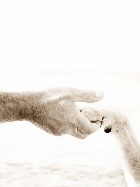 paw in hand stock photo