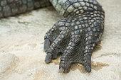 texture of alligator