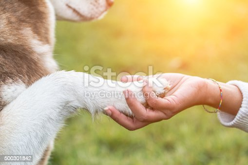 Young black woman and her dog (Siberian Husky) - Paw on hand