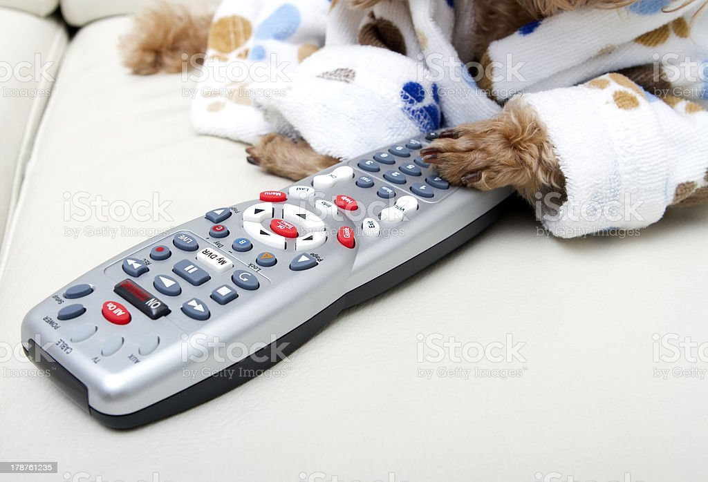 Paw On The Remote Control royalty-free stock photo