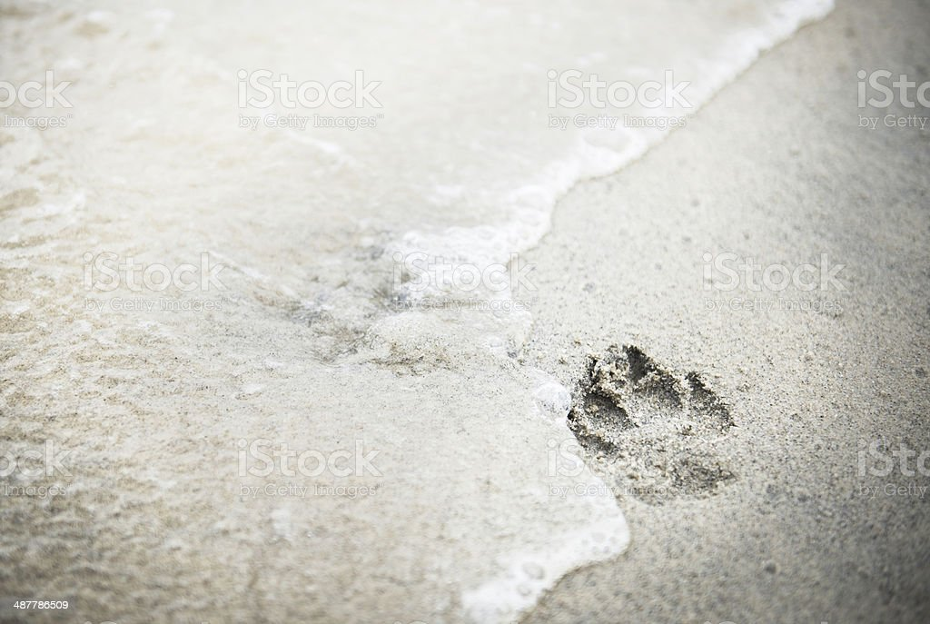 Paw Print in Sand at the Dog Beach stock photo