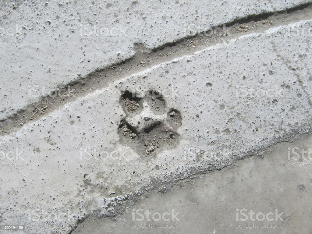 paw print stock photo