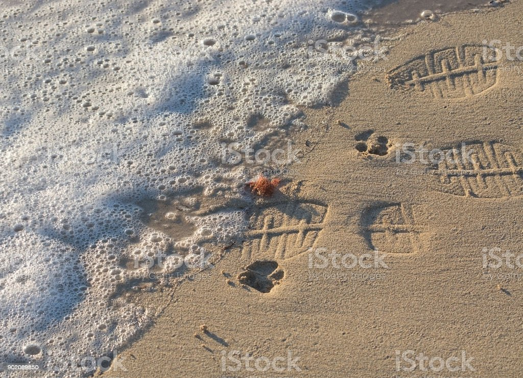 Paw prints and shoe prints stock photo