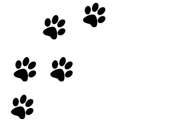 Paw prints black on a white background left of frame picture id488796074?b=1&k=6&m=488796074&s=612x612&w=0&h=upquzofpjan76uqphwf7uhasjyoiof5cspyzolz1nxk=