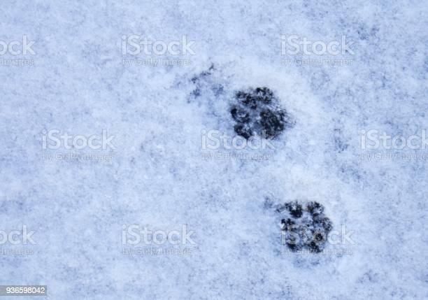 Paw prints in the snow picture id936598042?b=1&k=6&m=936598042&s=612x612&h=tnfevr 1z5vbrom0oov3bkdusctaoa8snnh4adfg5 w=