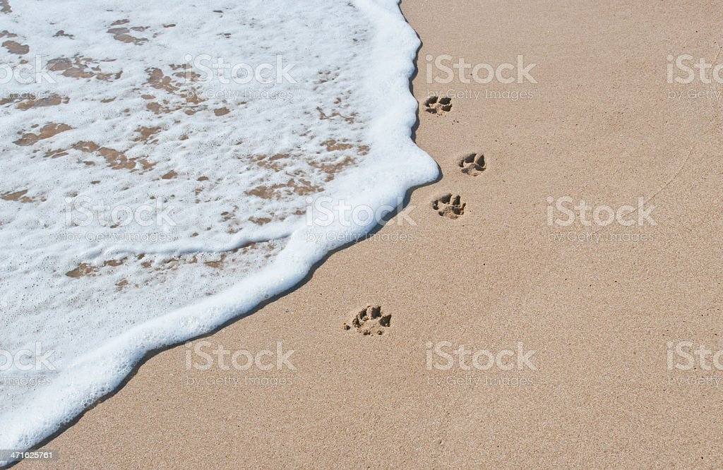 Paw Prints next to the sea stock photo