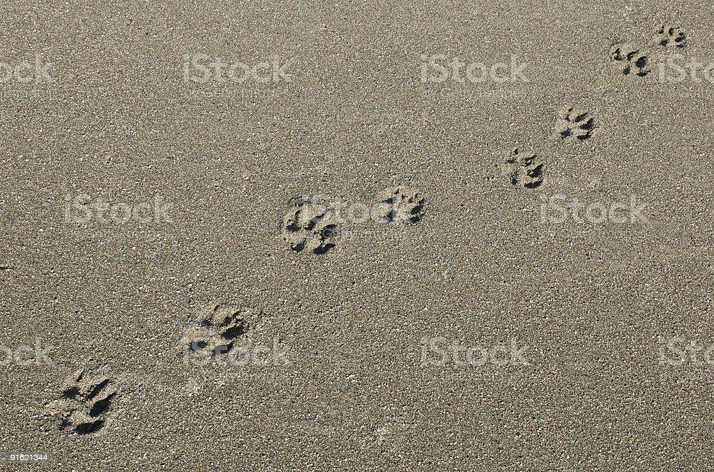 Paw Prints on Sandy Beach stock photo
