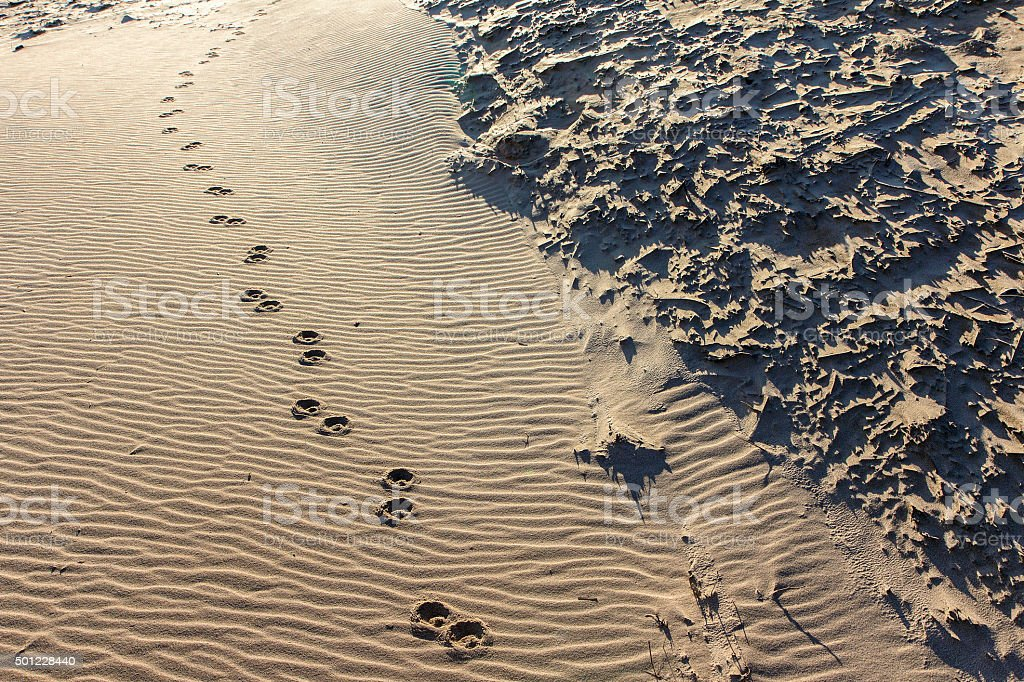 Paw-prints in the Sand stock photo