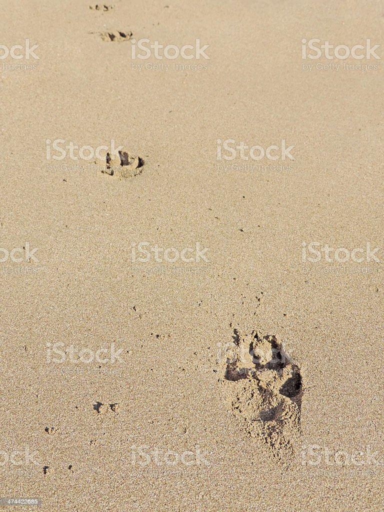 Pawprints stock photo