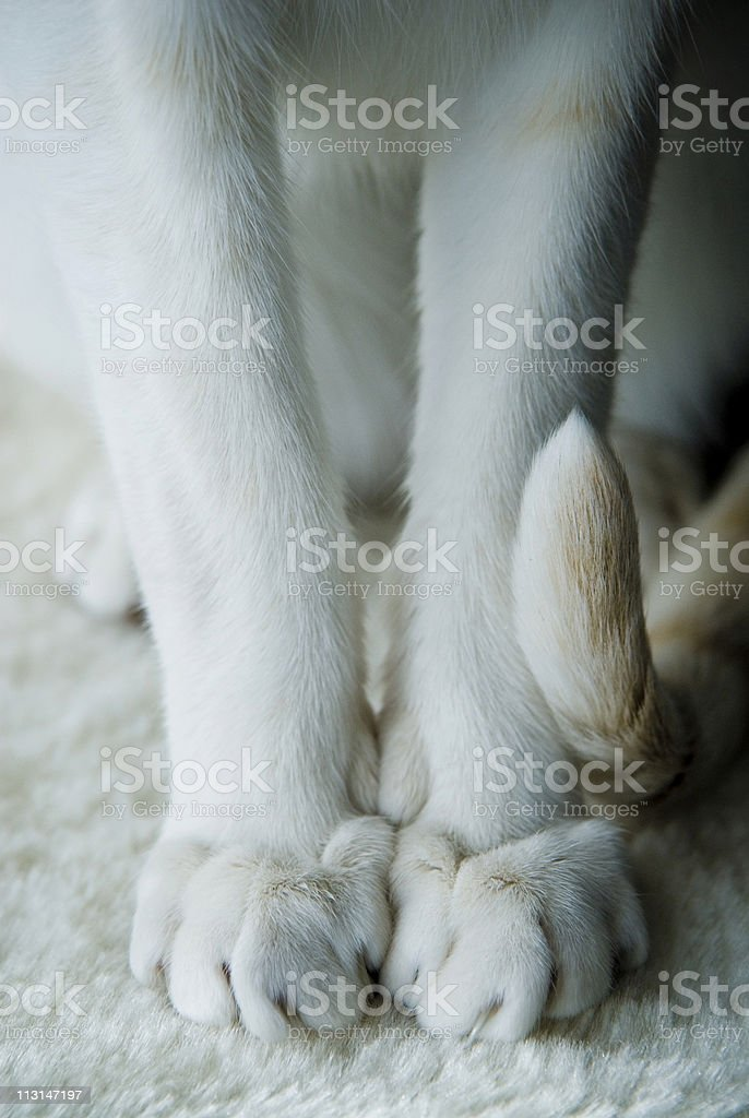 Paws and Claws stock photo