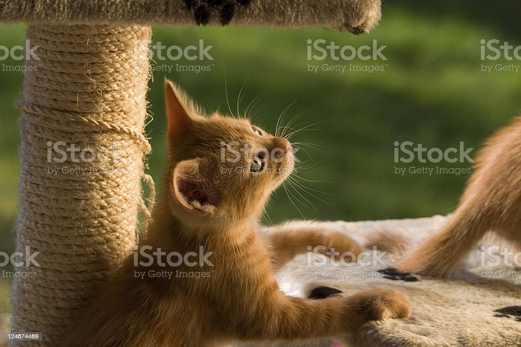 Paws For Reflection royalty-free stock photo