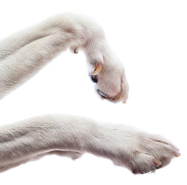 Paws of a dog picture id485870219?b=1&k=6&m=485870219&s=612x612&w=0&h=jkh5n7a9eue9xmba6hjwjzzykxo2iu0tpfizt2qca a=