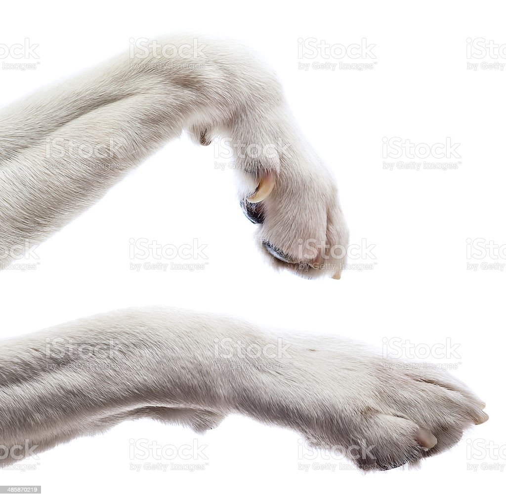 Paws of a dog stock photo