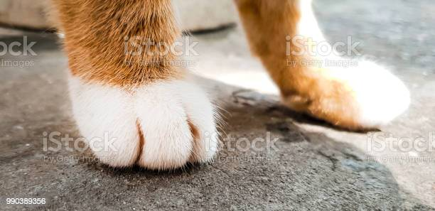 Paws of a red cat with white fingers closeup picture id990389356?b=1&k=6&m=990389356&s=612x612&h=9rafgoatvilfc7vaz1o t5kcb66 jcpdrjh2vs4hhve=