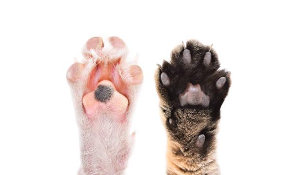 kedi ve köpek pençeleri birlikte beyaz arka plan üzerinde izole - pati stok fotoğraflar ve resimler