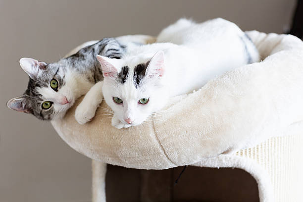 payful young cats friendship stock photo