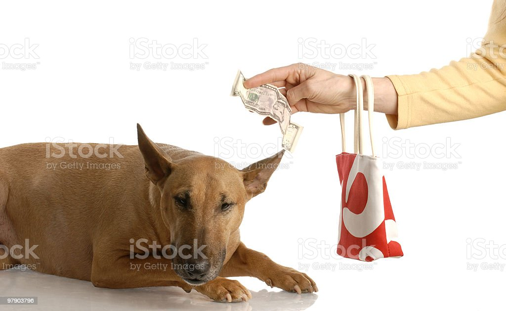 paying for expensive dog royalty-free stock photo