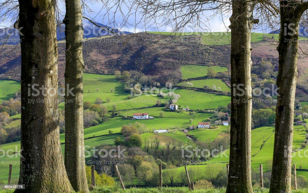 Pays Basque - Photo de Arbre libre de droits