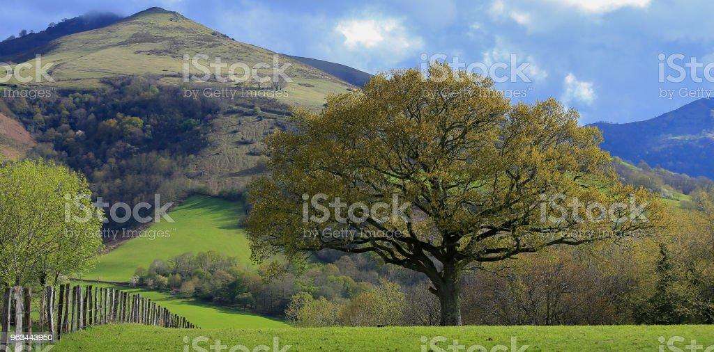 Bask Ülkesi - Royalty-free Ağaç Stok görsel