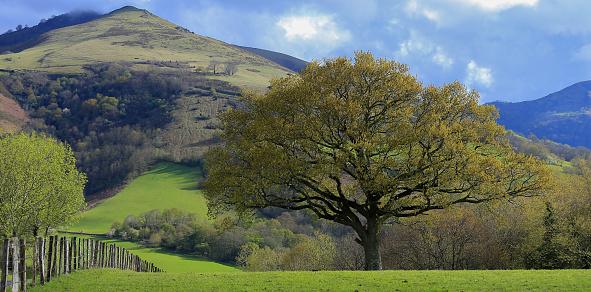 Bask Ülkesi Stok Fotoğraflar & Ağaç'nin Daha Fazla Resimleri