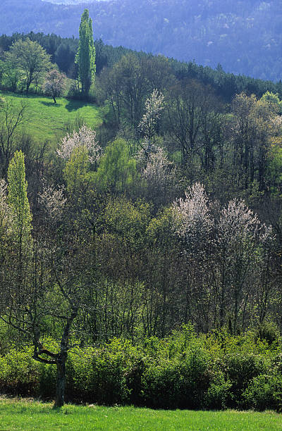 paysage de France stock photo