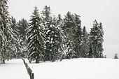 Paysage d'hiver sous la neige, dans la forêt - France