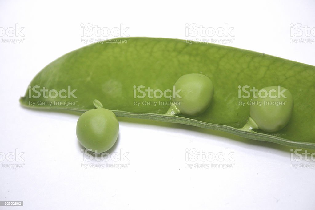 Pea Escaping Pod (colour) royalty-free stock photo