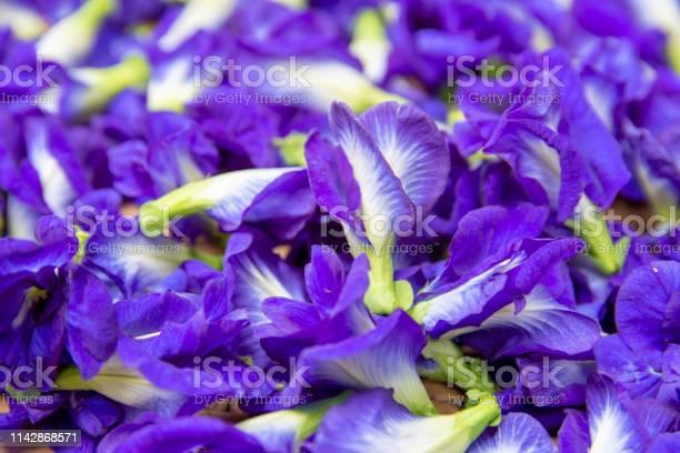 Pea flowers in blue picture id1142868571?b=1&k=6&m=1142868571&s=612x612&h=gyaochvdidnobkhfaoqyywyeeybenwocxbtkc n1ap4=