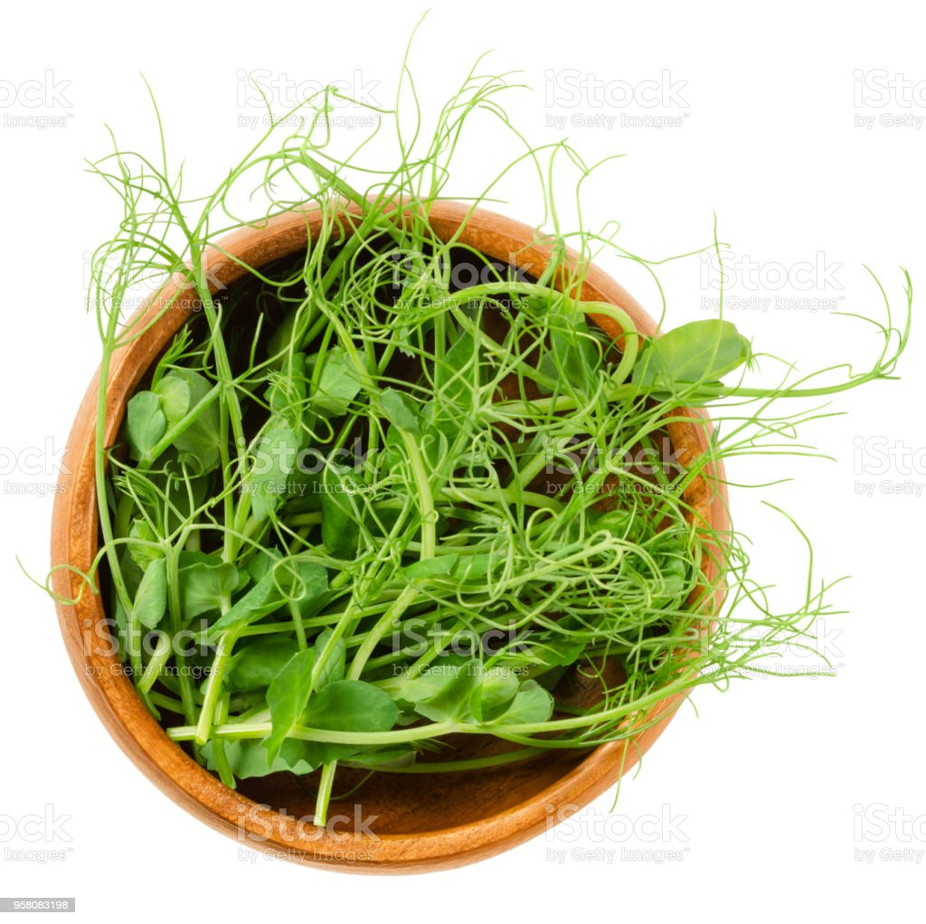 Pea microgreen, green shoots, in wooden bowl stock photo